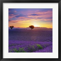 Framed Lavender Sky Sunset