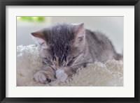 Framed Sleeping Kitten