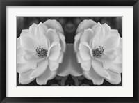 Framed Twin Rose 26