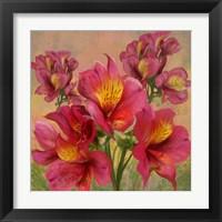 Framed Pink Orchid Bloom 1