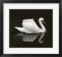 Framed Swan 1