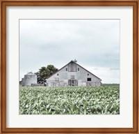 Framed Barn in crop rows