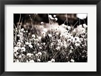 Framed Tiny Daisies