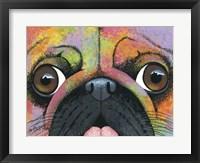 Framed Pugsy