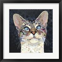 Framed Siamese Marvin
