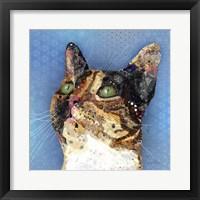 Framed Tortie Poppy