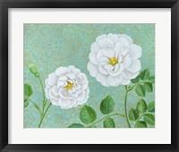 Framed Paris White Rose