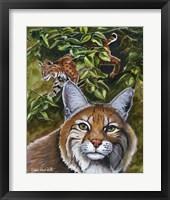 Framed Bobcats