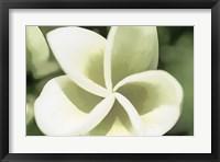 Framed Sketchy Frangipani Flower 5