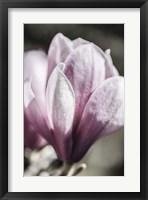Framed Stormy Spring 10