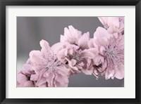 Framed Stormy Spring 12