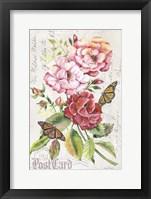 Framed Summer Rose Postcard A