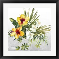 Beautiful Orchids C Framed Print