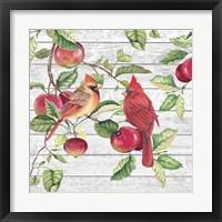 Fall Cardinals A Framed Print