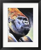 Framed Gorilla - Silverback