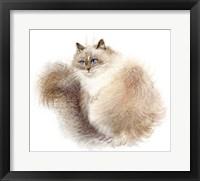Framed Fluffy Siberian