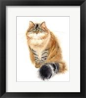 Framed Siberian Cat