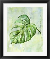 Framed Monstera with Background