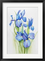 Framed Stems of Blue Iris