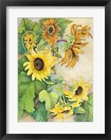 Framed Sunflowers Reaching for the Sun
