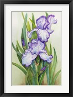 Framed Iris Dressed in Purple and White