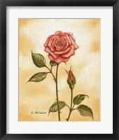 Framed Rose on Peach