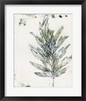 Presence of Nature VIII Framed Print