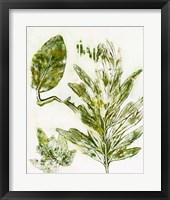 Presence of Nature IX Framed Print