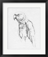 Framed Parrot Portrait I