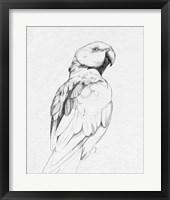 Framed Parrot Portrait II