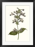Soft Blue Botanicals III Framed Print