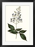 Framed Soft Blue Botanicals IV