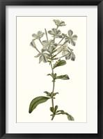 Soft Blue Botanicals VII Framed Print