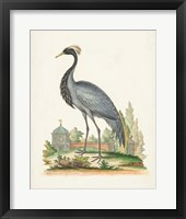 Framed Antique Heron & Cranes II