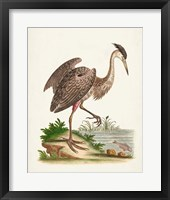 Framed Antique Heron & Cranes III