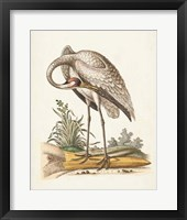 Framed Antique Heron & Cranes IV