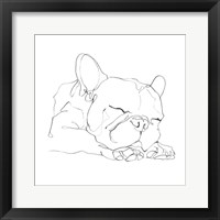 Framed French Bulldog Contour II