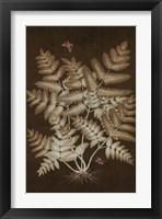 Framed Ferns in Roasted Brown I