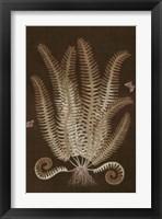 Framed Ferns in Roasted Brown III