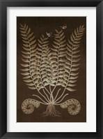 Framed Ferns in Roasted Brown IV
