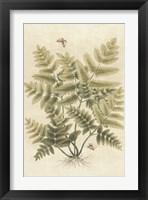 Framed Ferns in Antique I