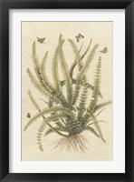Framed Ferns in Antique II