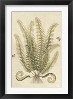 Framed Ferns in Antique III
