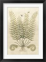 Framed Ferns in Antique IV