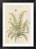 Framed Ferns in Antique V