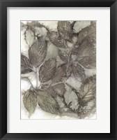 Framed Dogwood Leaves III