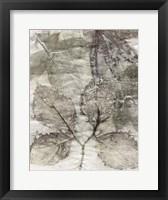 Framed Multi Leaves II