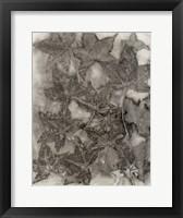 Framed Sweet Gum Leaves