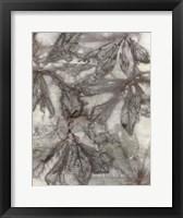Framed Water Oak Leaves