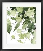 Framed Emerald Vines II